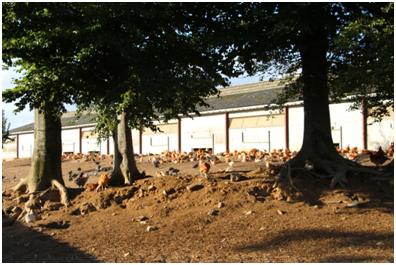 Exploitation agricole d'Yvetot - Atelier avicole - Poulets et pintades label